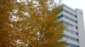 Herbstbäume und Geschäftszentrum stock video footage