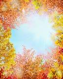 Herbstbäume verlässt auf blauem Himmel der Niederlassung und des freien Raumes mit Sonne, abstrakter Naturhintergrund Lizenzfreie Stockfotografie