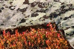 Herbstbüsche Lizenzfreie Stockfotos