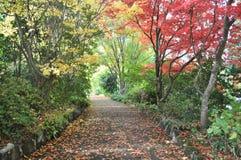 Herbstbahn Lizenzfreie Stockfotografie