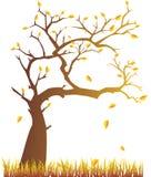Herbstbaum Lizenzfreie Stockfotografie