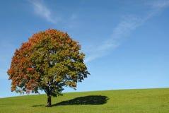 Herbstbaum Lizenzfreies Stockfoto
