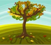 Herbstbaum Stockfoto