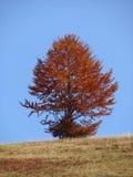 Herbstbaum Lizenzfreie Stockfotos