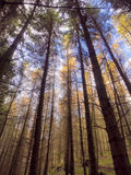 Herbstbaum abtract Lizenzfreie Stockbilder
