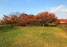 Herbstbaum auf dem Hügel mit blauem Himmel und Wolke Stockbild