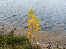 Herbstbaum auf der Flussbank Lizenzfreie Stockbilder