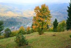 Herbstbaum auf Karpatenbergabhang. Stockbild