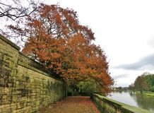Herbstbaum durch See lizenzfreie stockfotografie