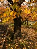 Herbstbaum in Hakodate-Park Lizenzfreie Stockfotos