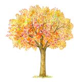 Herbstbaum Handdrawing lokalisiert auf Weiß Lizenzfreie Stockfotos