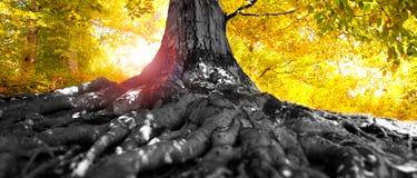 Herbstbaum im Wald Stockfoto