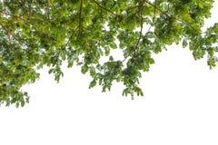Herbstbaum im Wald gesehen vom Boden oben lokalisiert auf Weiß Stockfotos