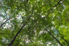 Herbstbaum im Wald oben gesehen vom Boden Lizenzfreie Stockbilder