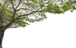 Herbstbaum im Wald oben gesehen vom Boden Lizenzfreies Stockfoto