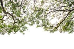 Herbstbaum im Wald oben gesehen vom Boden Stockbilder