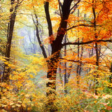 Herbstbaum mit bunten Blättern stockbilder