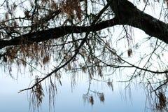 Herbstbaum mit Herbstlaub auf den Niederlassungen lizenzfreie stockfotografie