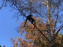 Herbstbaum mit Makiaffen Madagaskar lizenzfreies stockfoto