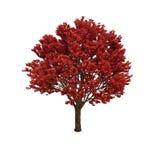 Herbstbaum mit rotem Laub Stockfoto