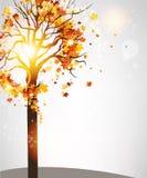 Herbstbaum mit schönen Blättern lizenzfreie abbildung