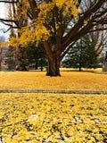 Herbstbaum mit zerstreutem Blatt stockfotos