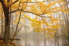 Herbstbaum ot das Wasserufer Stockfoto