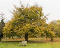 Herbstbaum und alte Bank Stockfotos