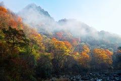 Herbstbaum und -berg Stockbild
