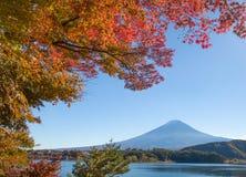 Herbstbaum und Berg Fuji Stockbilder