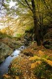 Herbstbaum und -fluß Stockfoto