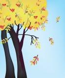 Herbstbaum und -himmel Stockfotos