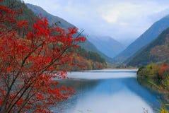 Herbstbaum und -see lizenzfreies stockbild