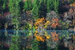Herbstbaum und -see in Jiuzhaigou Stockbild