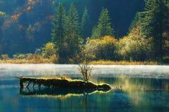 Herbstbaum und -see in Jiuzhaigou Stockfotografie
