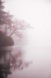 Herbstbaum und -teich im Nebel lizenzfreie stockfotografie