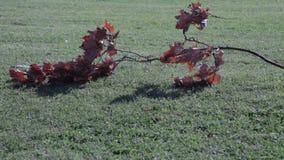 Herbstbaum verlässt Stapelgras stock video