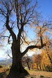 Herbstbaum, wenn die Sonne hinten sich versteckt stockfotografie