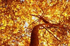 Herbstbaumhintergrund Stockfotografie
