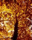 Herbstbaumhintergrund Lizenzfreie Stockfotos
