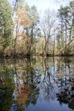 Herbstbaumreflexionen Lizenzfreie Stockbilder