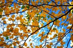 Herbstbaumzweige stockfoto
