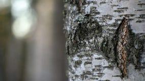 Herbstbaumzweige und farbige Blätter Stockbilder