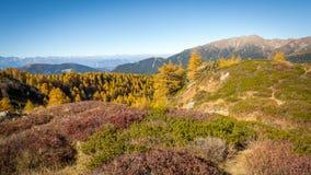 Herbstberg und bunte Walddolomit, Trentino Alto Adige, Italien Stockfoto