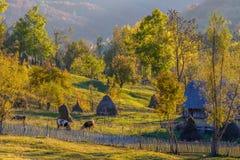Herbstberglandschaft mit Stapeln und Tieren Schöner Sun Stockbild