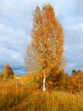 Herbstbirke Lizenzfreies Stockfoto