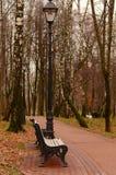 Herbstbirkenwaldung Stockfoto