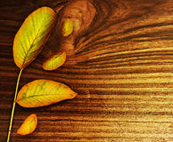 Herbstblätter über altem hölzernem Hintergrund Stockbild
