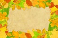 Herbstblätter stock abbildung