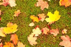 Herbstblätter Stockfotografie